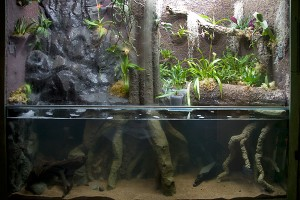 Akvariet nyfyllt