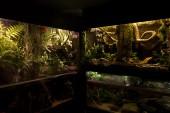 Paludarium, terrarium och akvarium