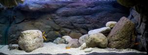 Tanganyika-akvariet