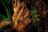 Stammen på mitträdet