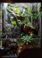 Nytt grodterrarium